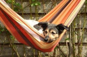 hund in hängematte in garten